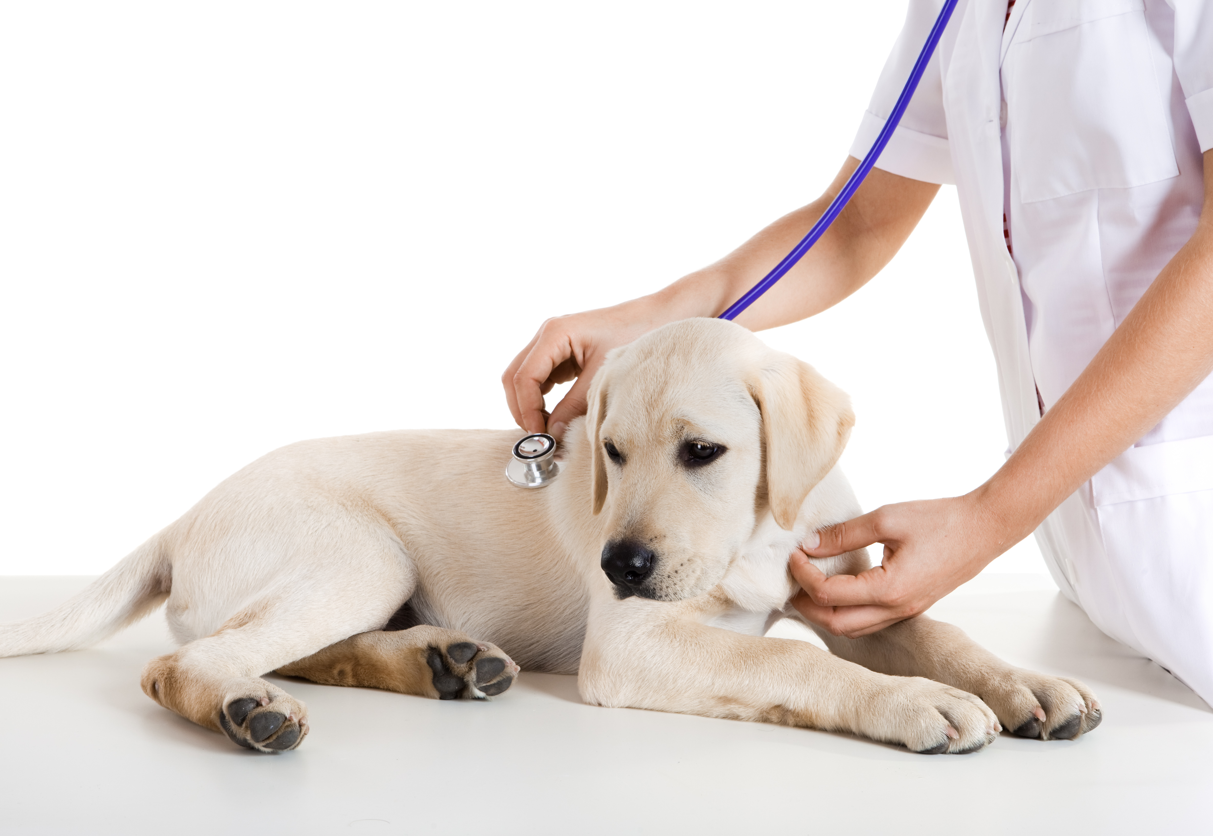 All You wanted to know about Puppy Deworming