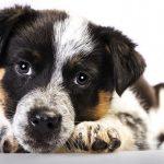 Doggies' Dental Problems – Don't Overlook! 6