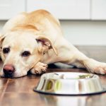 Talking Care of your Dog's Digestive Health