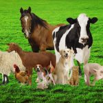 Importance of Veterinary Medicine in Maintaining Animal Health