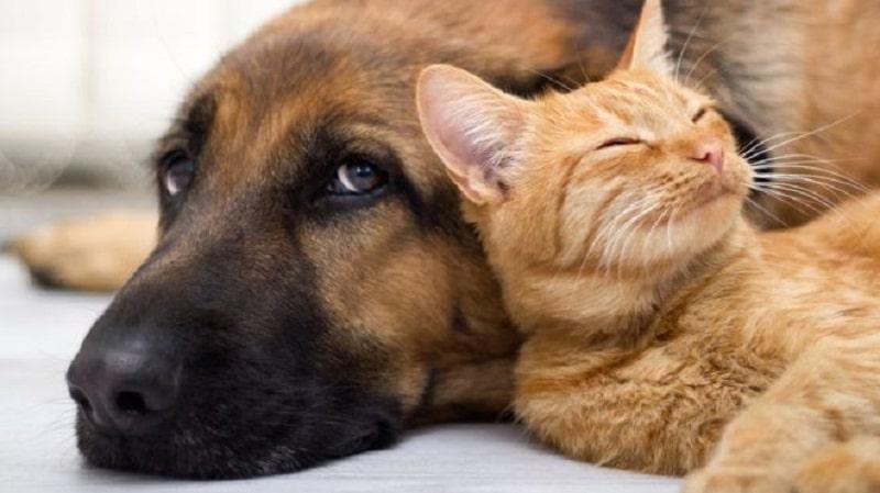 Animal Health & Safety and the Coronavirus Disease (COVID-19)