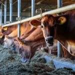 Animal Health Products - Treating the Livestock