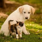 Signs of Joint Issues in Cats and Dogs