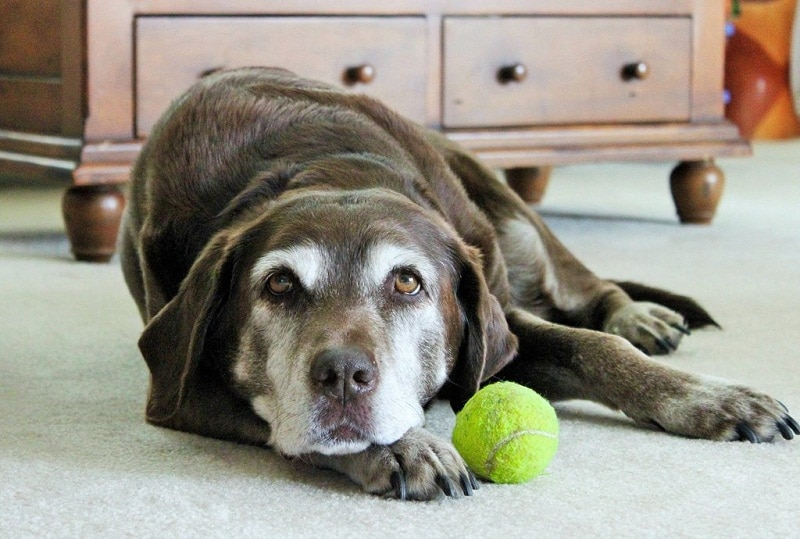 Cold Weather and Arthritis in Dogs: A Pet Owner Guide