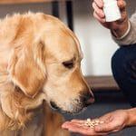 Tips and Tricks for Getting Pets to Take Their Medicine