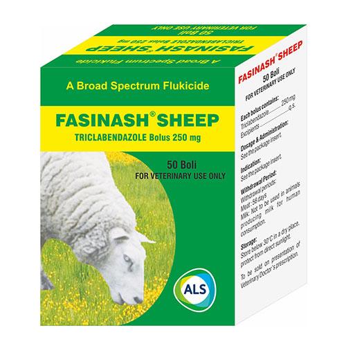 fasinash sheep